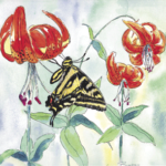 Swallowtail and Tiger Lily
